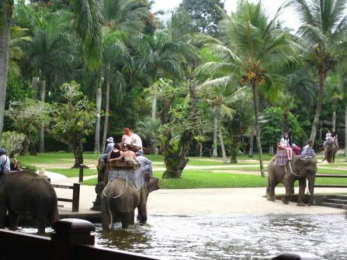 Катание на слонах на острове Бали  / Катание на слонах на Бали / ketvilz.ru