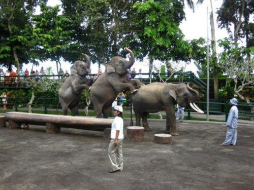 Шоу слонов на о. Бали  / Катание на слонах на Бали / ketvilz.ru