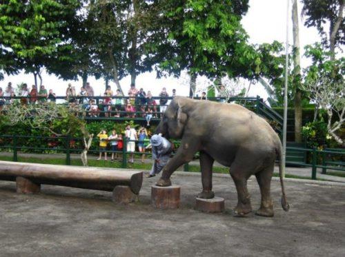 Шоу слонов на о. Бали  /  ketvilz.ru