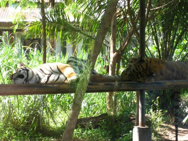 Зоопарк на Бали / ketvilz.ru