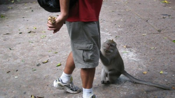 Достопримечательности на Бали деревня обезьян в Убуд / ketvilz.ru