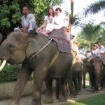 / Катание на слонах на Бали / ketvilz.ru