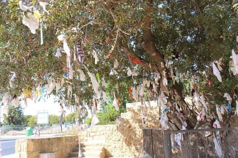 Фисташковое дерево желаний. г. Пафос. Кипр.