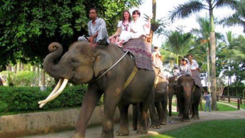 Катание на слонах на острове Бали  / ketvilz.ru