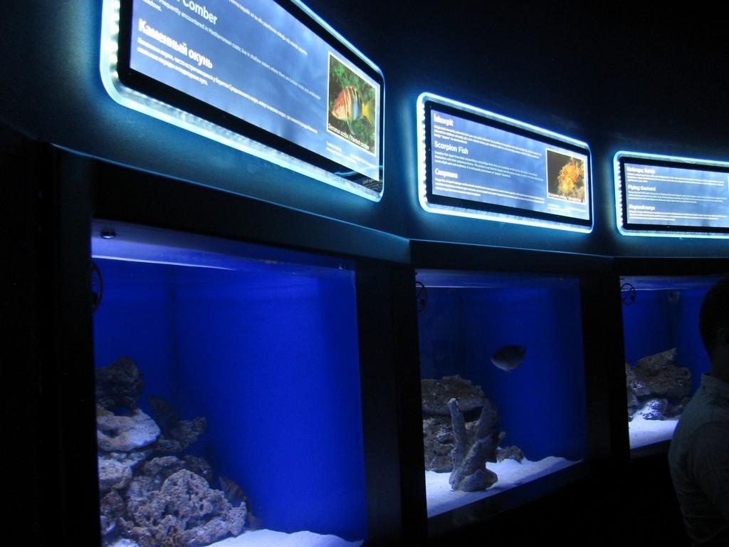 Океанариум в Анталии, Турция. Подводный туннель