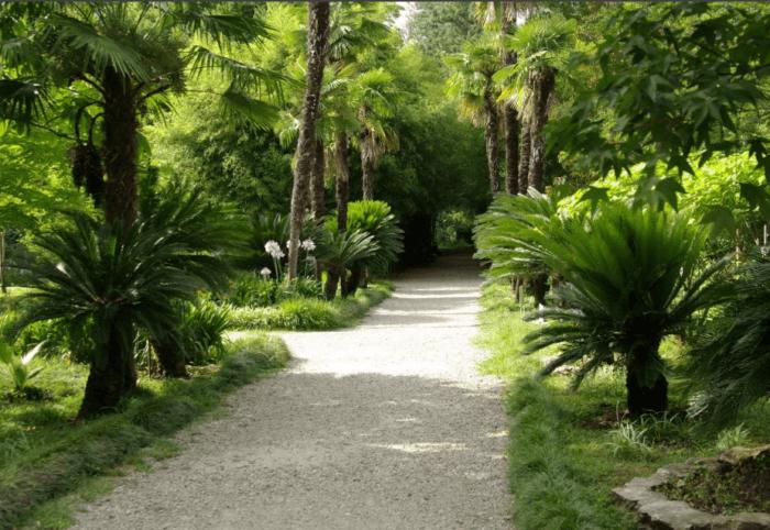 Сухуми. Ботанический сад / чем привлекает туристов Абхазия / ketvilz.ru